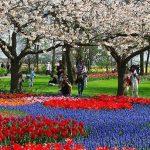 Parque Keukenhof na Holanda é o mais florido do mundo