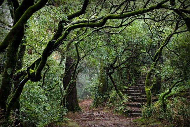 Floresta Laurissilva da Madeira em Portugal