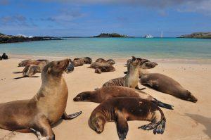 Conheça Galápagos, o arquipélago do Equador que inspirou a Teoria da Evolução