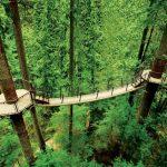 Capilano Park, no Canadá, tem pontes suspensas acima de rios, penhascos e árvores