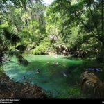 Conheça o Parque Blue Spring, na Flórida, refúgio de águas mornas cristalinas e peixes-boi