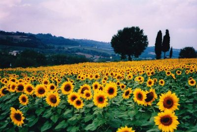 12 lugares para curtir a Primavera e ver o colorido das flores