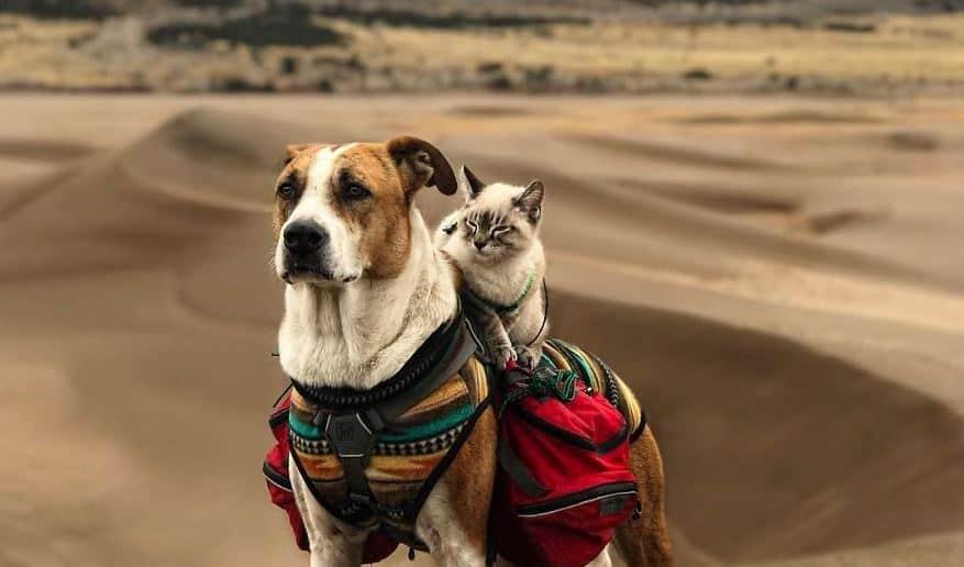 Henry e Baloo: conheça a adorável dupla que já viajou mais do que muita gente