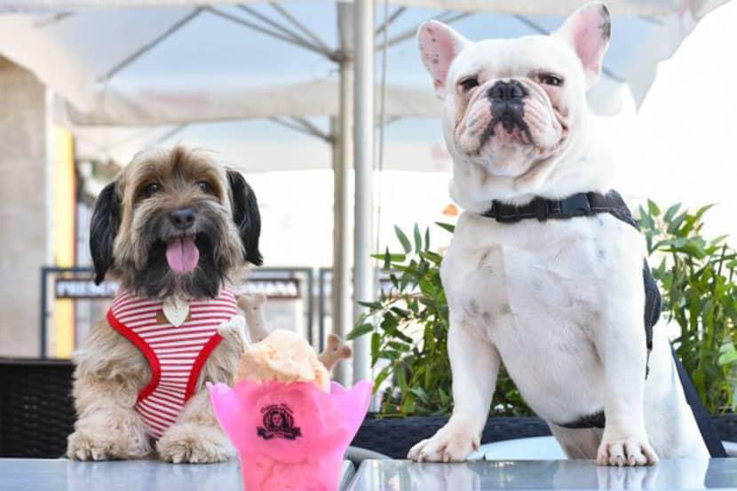 Sorveteria em Porto oferece gelato gratuito para cães que acompanham seupasseio