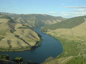 O vinho e o Porto: conheça a rota do mais famoso vinho português