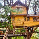 Casa na árvore em Campos doJordão oferece um gostinho dos sonhos de infância