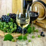 Rota dos Vinhos de São Paulo: as melhores vinícolas para você visitar