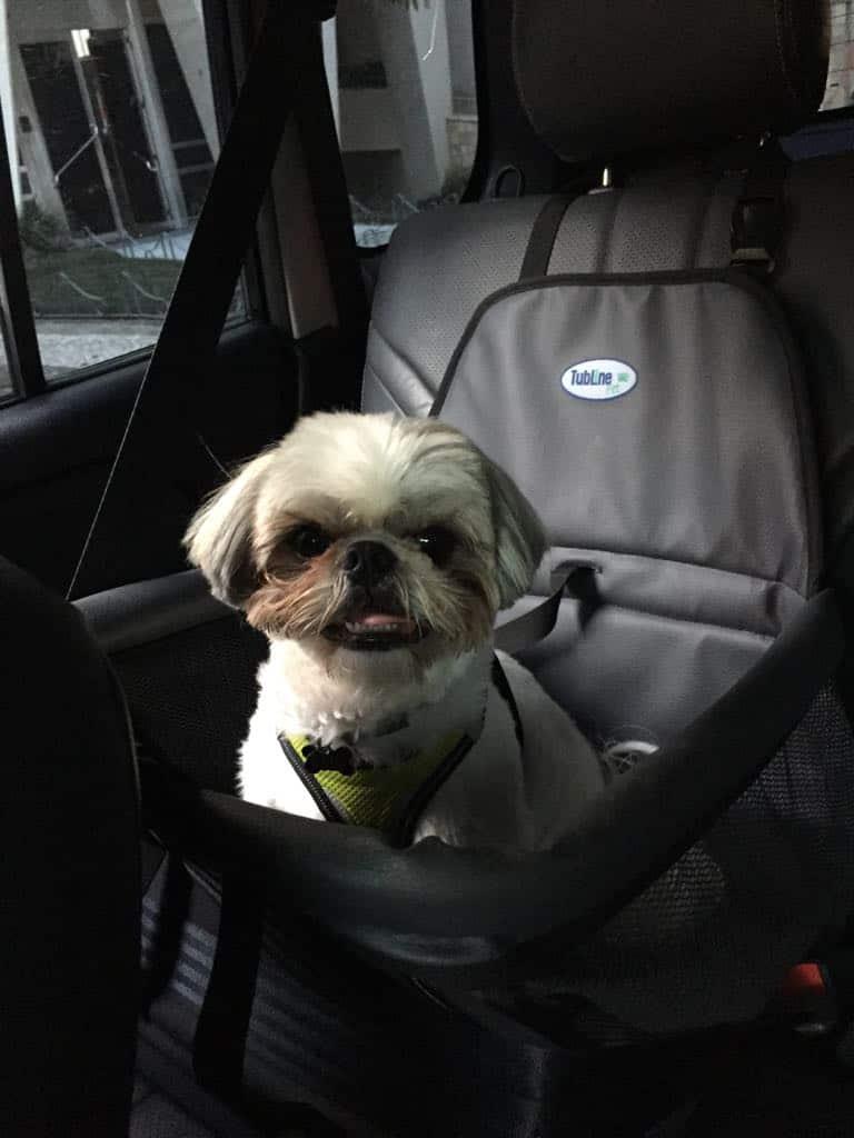viajar de carro com cachorros