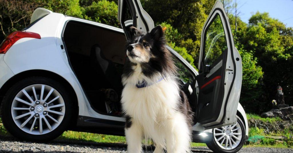 10 dicas para viajar de carro com cachorros com segurança