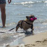 Bau Bau Beach: a praia italiana especial para cães