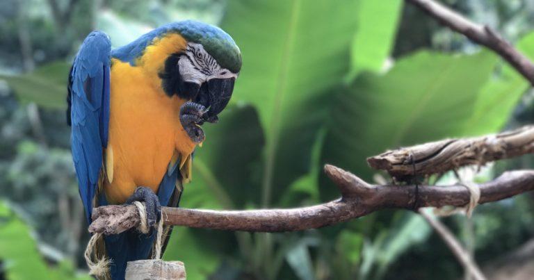 Parque das aves em Foz do Iguaçu é opção de passeio para toda família