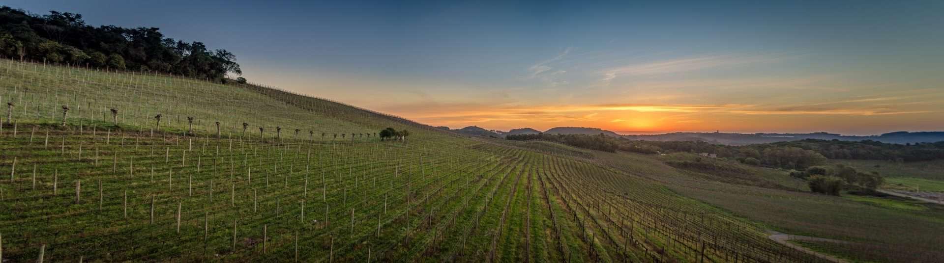 Vale dos Vinhedos, o paraíso do vinho na Serra Gaúcha
