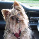 5 itens para viajar de carro com pets com segurança
