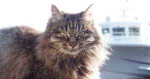 7 cidades para quem ama gatos colocar no roteiro de viagens