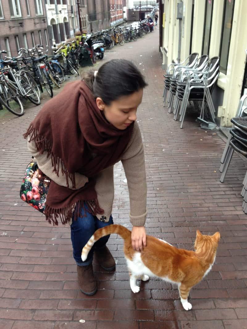 cidades para quem ama gatos amsterda