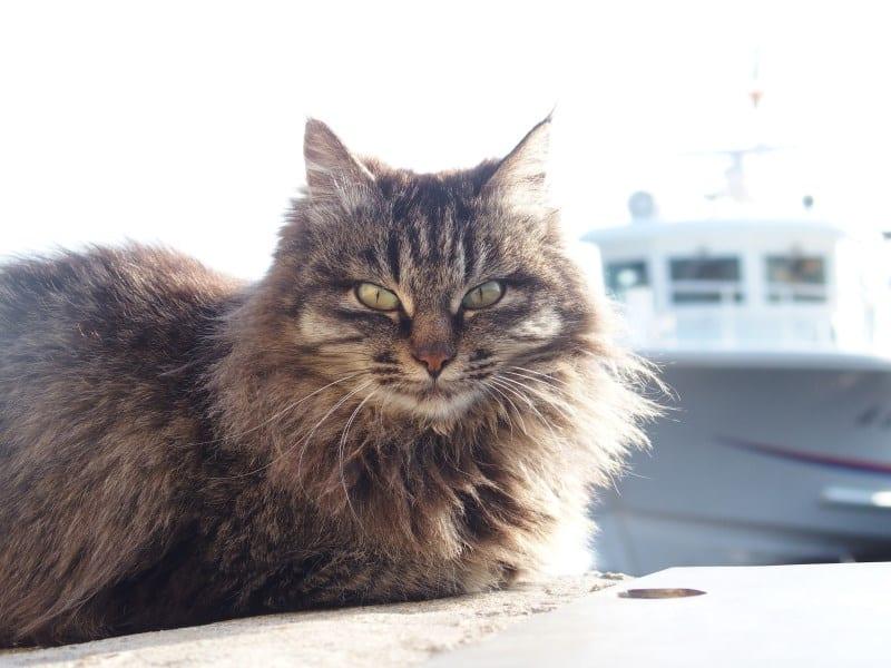 cidades para quem ama gatos ilha dos gatos