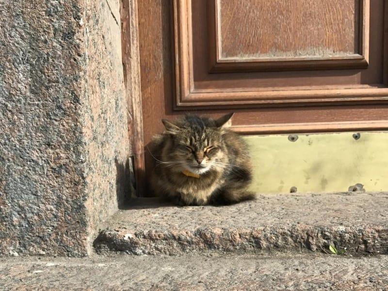 cidades para quem ama gatos são petesburgo