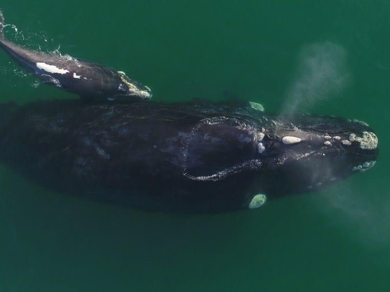 baleias em santa catarina
