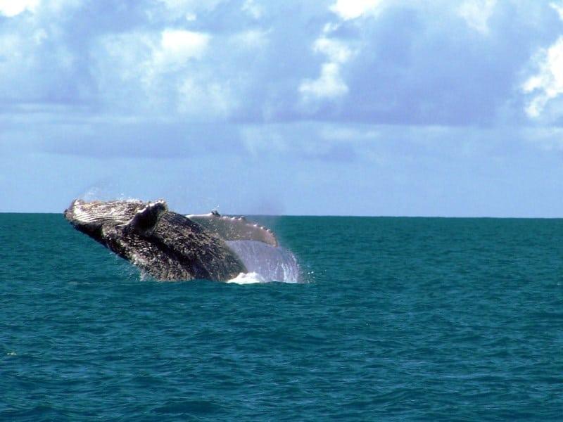 costa das baleias na bahia