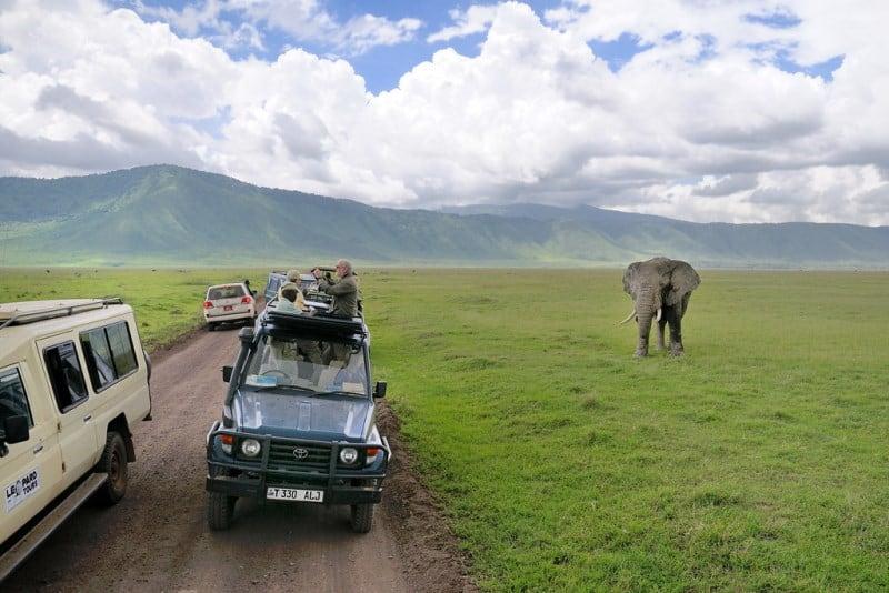 Safári na África: onde fazer e dicas gerais para quem vai se aventurar pela primeira vez