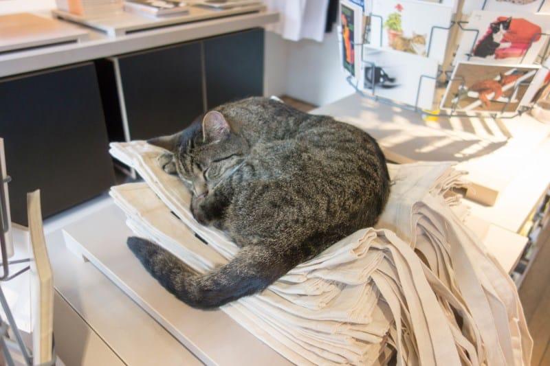 museu-dos-gatos