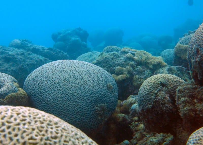 parque nacional marinho de abrolhos