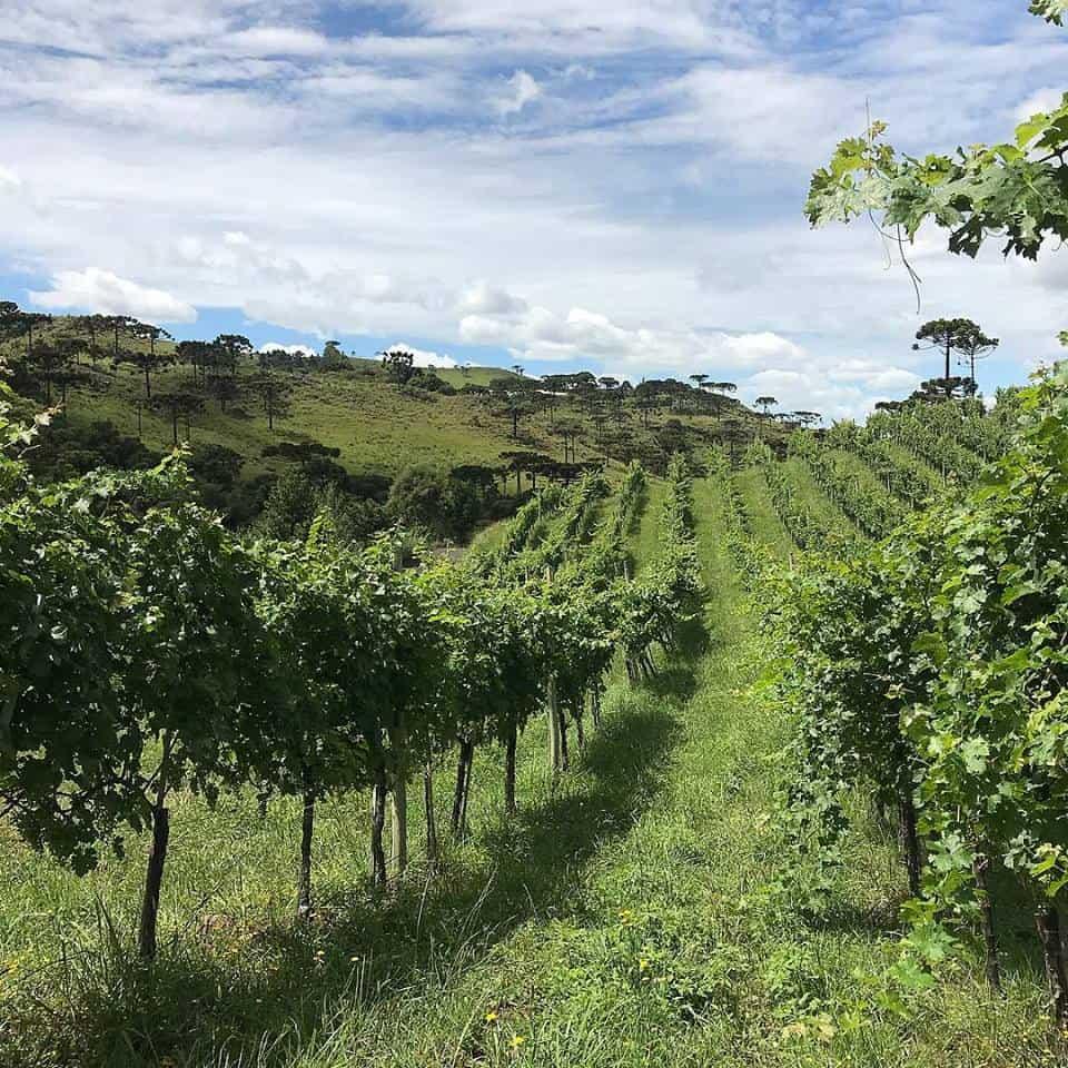 Um roteiro pelas vinícolas da serra catarinense