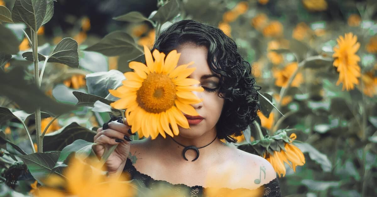 Jardim de girassóis em Joinville é o cenário perfeito para suas fotos em meio a 7 mil flores