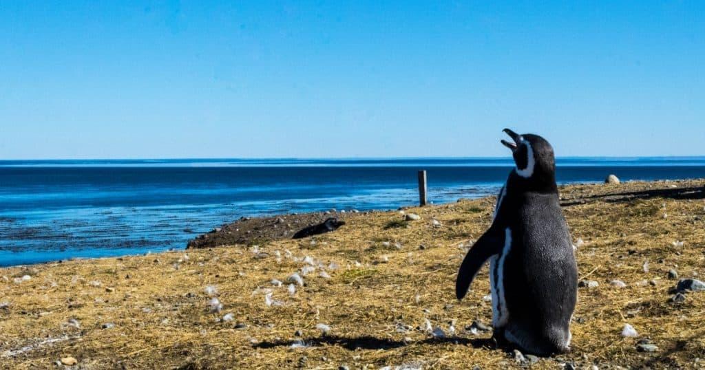 Reduto de pinguins, o Parque Nacional Isla Magdalena é mais uma beleza da Patagônia Chilena