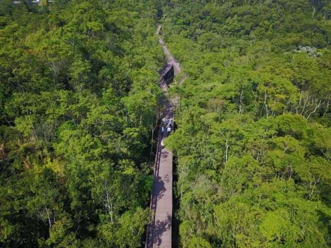 Parque em São Paulo tem pontes suspensas e acessibilidade em trecho da Mata Atlântica