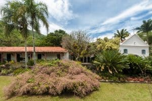 Descubra o paisagismo tropical do Sítio Roberto Burle Marx no RJ