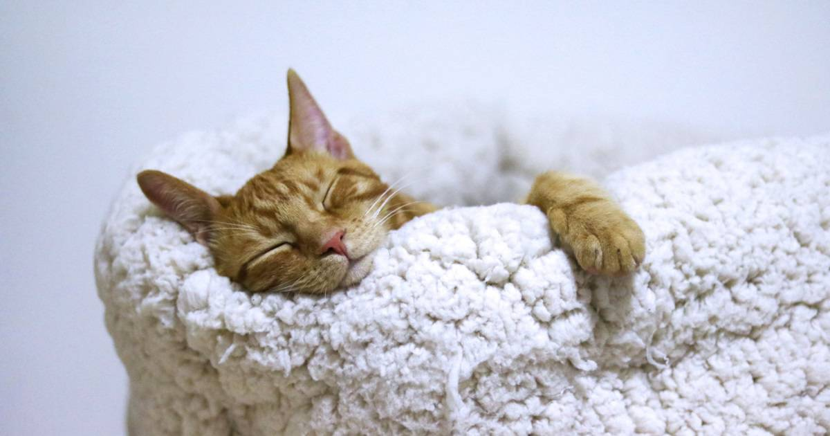 Que tal cuidar de pets em troca de hospedagem? Conheça o Trusted House Sitters