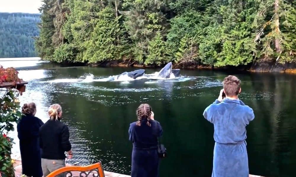 Baleias jubarte nadam perto de hotel, encantando hóspedes e toda a internet