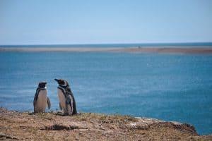 Encante-se com a fauna da Península Valdés, na Patagônia Argentina