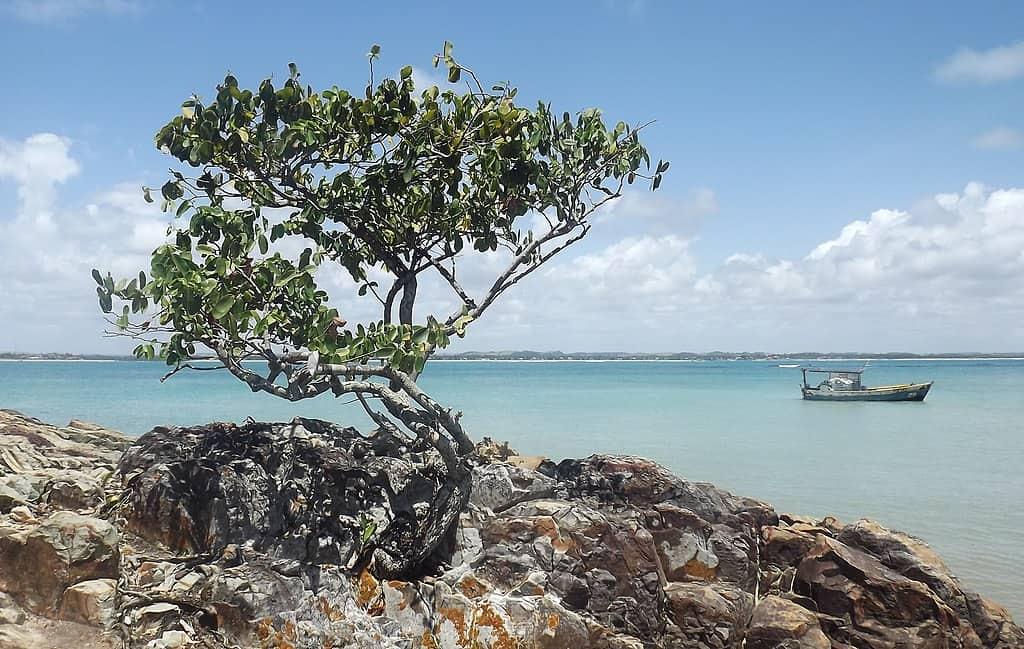 Ilha de Santo Aleixo: um paraíso pernambucano que você precisa conhecer