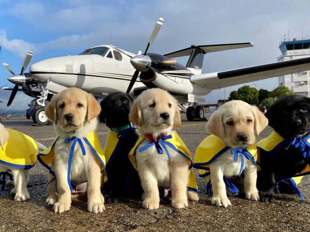 Três filhotes de cachorro com capa esperando para voar