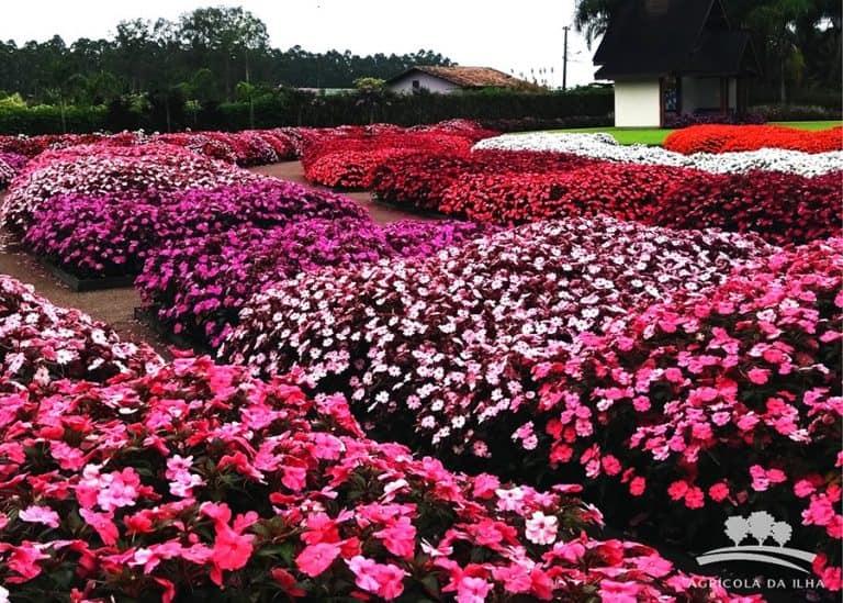 Florido todo dia, jardim em Joinville é um passeio encantado