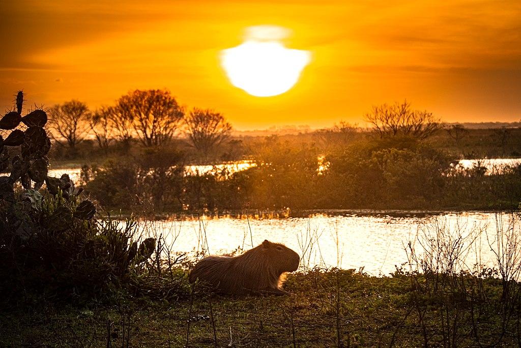 Estação Ecológica do Taim no RS une natureza e beleza selvagem