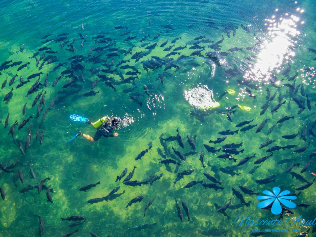 8 museus subaquáticos para conhecer pelo mundo