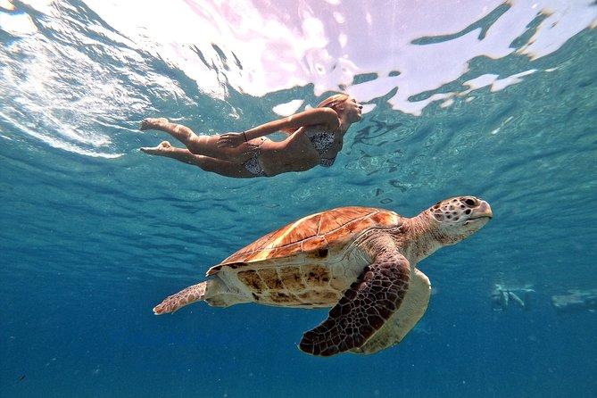 Mergulho com tartarugas