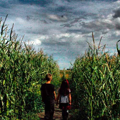 Calgary Corn Maze & Fun Farm
