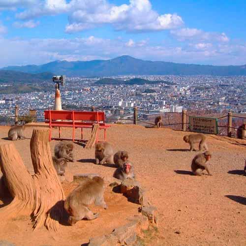 Monkey Park Iwatayama (Arashiyama)