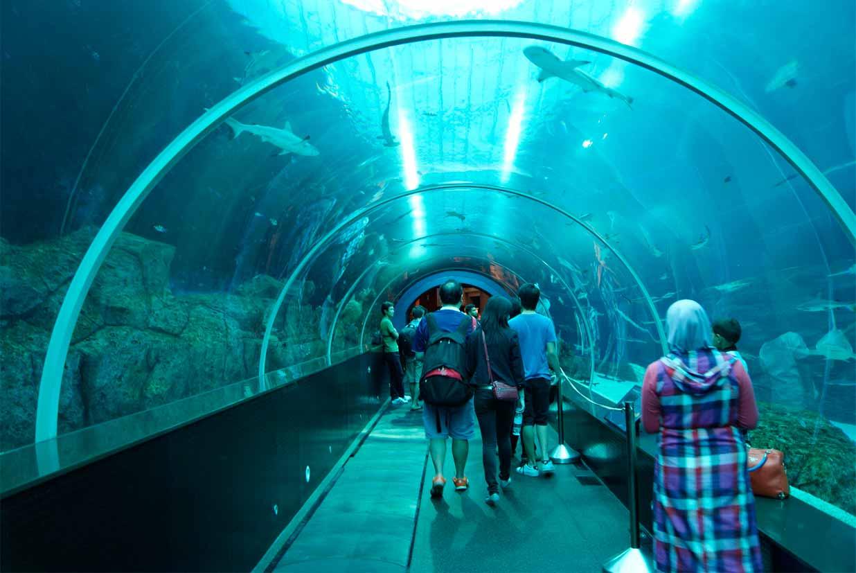 Aquário (Marine Life Park)