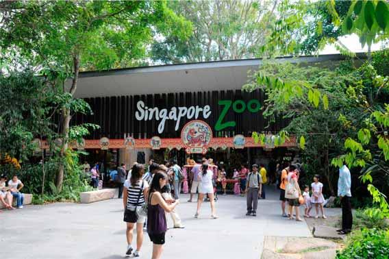 Zoológico de Singapura