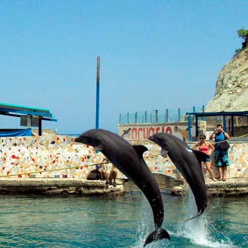 Passeio Aquário Marítimo e Museu Rodadero + Praia Branca