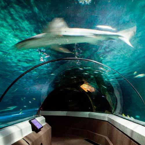 Aquário Sea Life Mooloolaba