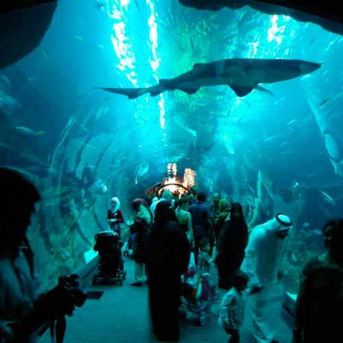Aquário de Dubai
