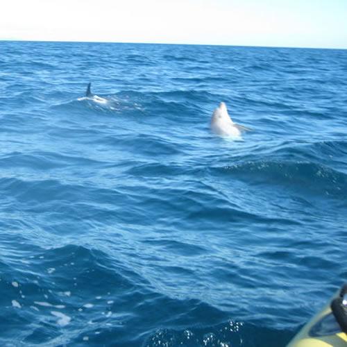 Passeio com golfinhos e nas cavernas