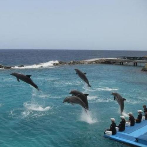 Aquário de Curaçao