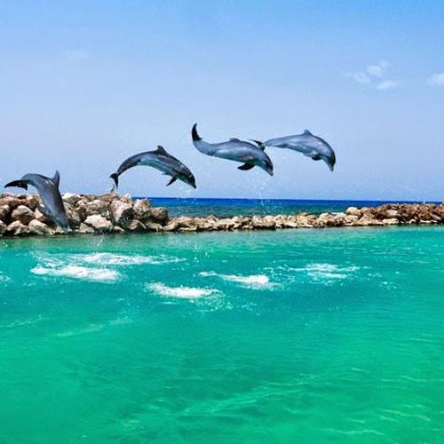 Dia em Dolphin Cove